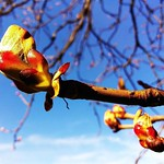 Spring's on it's way. thumbnail