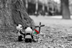 Panda Story (3/3) - Death (Ballou34) Tags: 2017 7dmark2 7dmarkii 7d2 7dii afol ballou34 canon canon7dmarkii canon7dii eos eos7dmarkii eos7d2 eos7dii flickr lego legographer legography minifigures photography stuckinplastic toy toyphotography toys paris îledefrance france fr 7d mark 2 ii eos7d stuck plastic in panda love flower flowers lov bw black white red palais royal life child children death cross tomb rocks rock