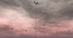 Flourish (S!nny) Tags: landscape moody surreal surrealism