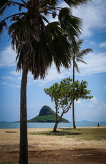 The view from here (kimbar/Thanks for 2.5 million views!) Tags: beach chinamanshat hawaii island oahu ocean pacific palmtree shore trees