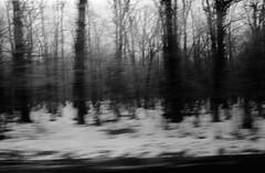 ... (haj.pawel) Tags: drzewo fomapan400 las zenithe sieradz snieg wruchu analog inmotion motion tree wood forest fast time 8600f canoscan