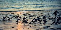 Crows (Perceptive Photography (Consistently Inconsistent)) Tags: sea perceptivephotography shadesoflight water mumbai india nikonflickraward crows beach greatphotographers