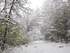 IMG_2831 (sjj62) Tags: s90 snow snowscape lith lakeinthehillsil winter winterscape