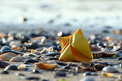 Spiral Shell ( origami ) (Adri 79) Tags: origami paper spiralshell toshikazukawasaki adrianodavanzo adri79 canon7dmarkii canonef300mmf4lisusm