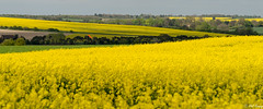 Red Sock (PhilR1000) Tags: windsock landscape oilseedrape rapaseed yellow fields