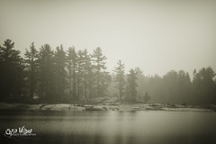 Across the Lake (wilbias) Tags: ontario canada lake white black pine sound central canadian shield ardbeg parry pinus strobus