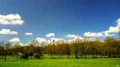 beautiful Sky (YᗩSᗰIᘉᗴ HᗴᘉS +5 000 000 thx❀) Tags: belgium bruxelles brussels sky bluesky clouds green landscape yasminehens trees 7dwf