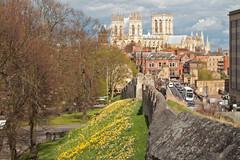 York Minster (christina.marsh25) Tags: yorkminster york yorkshire walls city daffodils yellow flickrfriday hdr