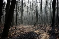 *** (pszcz9) Tags: polska poland przyroda nature natura las forest forestimages poranek morning mgła fog mist ścieżka path światło light cień shadow drzewo tree pejzaż landscape beautifulearth sony a77