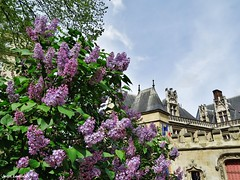 Square Paul-Painlevé (JeanLemieux91) Tags: lilas lilac arbres trees árboles fleurs flowers flores paris îledefrance france avril april abril primavera printemps spring 2017