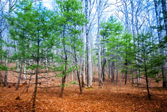 Forest Scene, Pink Beds Loop Trail, Pisgah National Forest (Brevard, NC) (*Ken Lane*) Tags: geo:lat=3535440615 geo:lon=8276814222 geotagged wolfford appalachia appalachianmountains blueridgemountains blueridgeparkway brevard brp cartoon forest forestscene hikingtrail nationalforest nature northcarolina outdoor pinkbeds pinkbedsloop pinkbedsloophike pinkbedslooptrail pisgahforest pisgahnationalforest topaz topazcartoon topazsimplify topazsoftware translyvaniacounty trees unitedstates usa westernnorthcarolina wnc woods