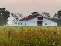Texas Barn (guillecabrera) Tags: olympus olympusomdem1 50200mm texas barn country morning