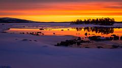 orange morning (SeALighT!) Tags: sweden schweden sverige lapland lappland arjeplog sunrise lake hornavan swans snow rocks reflections trees