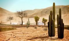 Desolate . . . (Iris Okiddo) Tags: desert cactus trees grass mountains sun hot warm cracked dry alone lonely desolate