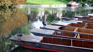 River Cam (Archive)