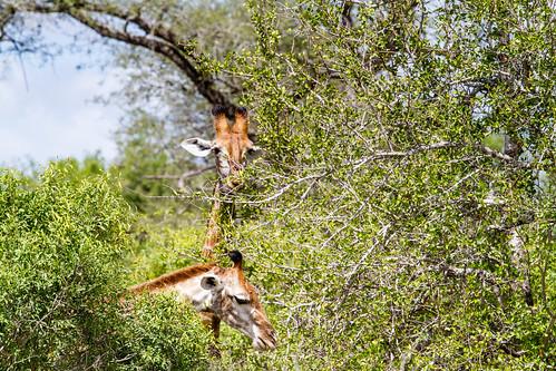 KrugerParkREIZ&HIGHRES-39