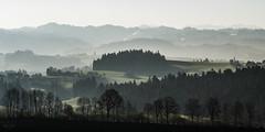 Morgenstimmung (uhu's pics) Tags: hills trees forest hügel bäume wald switzerland mood morning stimmung morgen schweiz emmental affoltern xpro fuji
