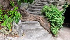 No meio do caminho tinha um tronco * (Rctk caRIOca) Tags: catete flamengo jardins do museu da república rio de janeiro