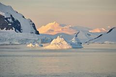 Adelaide Island alpenglow (i-lenticularis) Tags: antarctica antarcticpeninsula elmaritrapo180f34 dusk ice adelaideisland alpenglow icedecay iceberg k1