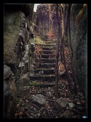 """let's take a walk"" (krka_84) Tags: stairs forest war somewhere fredrikstad"