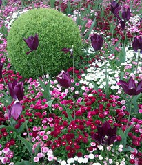 flower garden at howlets zoo canterbury (mystic-shadow) Tags: flowers england flower garden zoo kent spring tulips canterbury greenery whites colourful shrub pinks purples howlets flickrandroidapp:filter=none