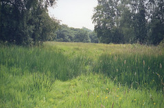 Film Friday (Caroline B Kuhn) Tags: green june hampsteadheath contaxg2 colourfilm