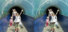 3D zoo aquarium tunnel (3D shoot) Tags: fish bristol zoo aquarium 3d underwater stereo parallel stereoscope 3dshoot