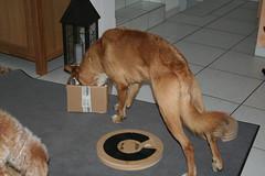 Suchspiel 011 (leeder-five) Tags: suchspiel