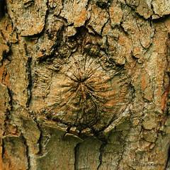 NO (Lutz Koch) Tags: tree forest pentax bark trunk wald baum rinde bois k7 erd elkaypics