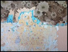 SPEAKING WALL (LitterART) Tags: wallpaper castle art wall geese wine decay wand vine goose slovenia slovenija slowenien schloss tapete wein admont dvor weinverkostung konradi stiftadmont jarenina dveripax schlossjarenina jareninskidvor speakingwall sprechendewand