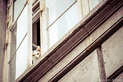 Katzenblick (Martin.Matyas) Tags: animal animals cat canon tiere katze dänemark kopenhagen tier 2013 canonefs1785isusm eos7d 0810092013
