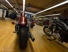 Voigtlander 15mm f4.5 NEX a7  4-18 -1 ( - My world) Tags: voigtlander harley f45 motorcycle davidson 15mm a7 nex nexa7voigtlander15mmf45