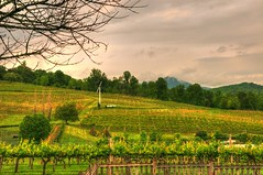 ngavineyards (MFer Photography) Tags: atlanta mountains creek georgia vineyard vines wine crane north grapes hdr weloveatl msh0514 msh051410 ibelieveinatlanta