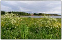 Sommer på Bud 2005 (Krogen) Tags: nature norway landscape norge natur norwegen olympus c7070 noruega bud scandinavia romsdal fræna krogen landskap noorwegen noreg skandinavia