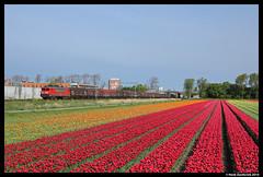 DBS 1615 + 61601, Sassenheim 12-4-2014 (Henk Zwoferink) Tags: db henk 1615 dbs tulpen schenker warmond voorhout staal sassenheim staaltrein 61601 zwoferink