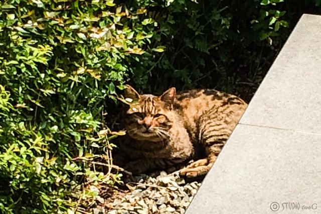 Today's Cat@2014-05-09