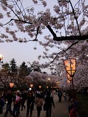 14042601 (frappef19996) Tags: aomori hirosaki sakurafestival