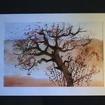 "vieil arbre <a style=""margin-left:10px; font-size:0.8em;"" href=""http://www.flickr.com/photos/122771498@N03/14304180666/"" target=""_blank"">@flickr</a>"