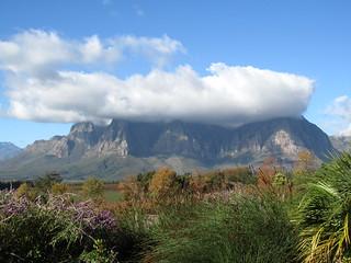 Cape Town Luxury Safari 18