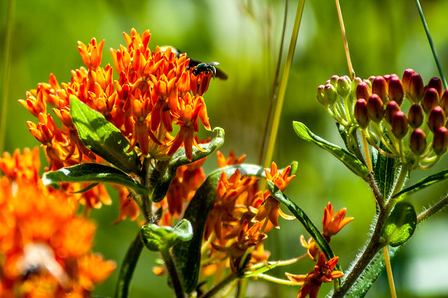 Jackson-Washington State Forest - Spurgeon Hollow Lake - June 25, 2014
