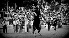 En un oscuro (Eduardo Amorim) Tags: horses horse southamerica caballo uruguay cheval caballos cavalos prado montevideo pferde cavalli cavallo cavalo gauchos pferd hest hevonen chevaux gaucho 馬 américadosul montevidéu häst uruguai gaúcho 말 amériquedusud лошадь gaúchos 马 sudamérica suramérica américadelsur סוס südamerika jineteada حصان άλογο americadelsud gineteada ม้า americameridionale semanacriolla semanacriolladelprado eduardoamorim ঘোড়া