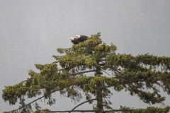 Double Eagle - Kadake Bay, Alaska