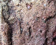 Melbourne Basalt Colours 2 (jasonol0gy) Tags: rock iphone5 olloclip macro refine aviary notripod geology