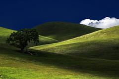Passing Shadows (Abel AP) Tags: california usa foothills tree nature clouds canon landscape hills dslr livermore oaktree livermoreca eosrebelt3i abelalcantarphotography