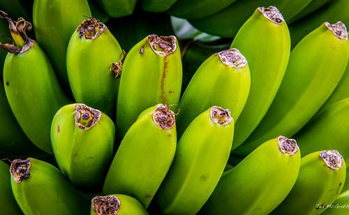 2014 - Costa Rica - Doka Estate - Not ripe for Picking - yet