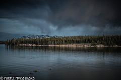 Yellowstone Shoreline (Purple Moose Basics) Tags: yellowstone nationalparks yellowstonesummer