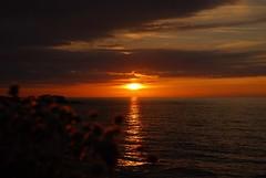 borizu, asturias (Arbesu80) Tags: sunset flores atardecer asturias playa llanes cantabrico celorio
