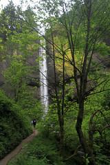 Latourell Falls (AmandaMT) Tags: green water stone oregon forest waterfall rapids columbiariver oregontrail westcoast basalt 2014 latourellfalls hwy30