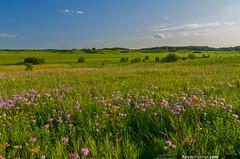 Edge of Nachusa (kevin-palmer) Tags: pink blue summer sky green grass clouds illinois july wildflowers prairie preserve wildbergamot thenatureconservancy franklingrove kevinpalmer tamron1750mmf28 nachusagrasslands pentaxk5