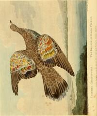 Anglų lietuvių žodynas. Žodis cupreous reiškia , cupric ,a varinis; panašus į varį; turįs vario lietuviškai.